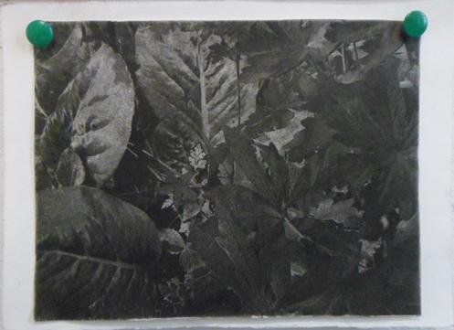 fotopolymeer